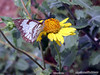 Butterfly on flower near Marker at the Topic of Capricorn.