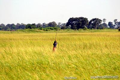 Poler pushing a mokoro(dugout canoe) in the Okavango Delta.