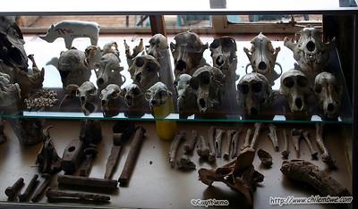 Skulls on display at Wonder cave.