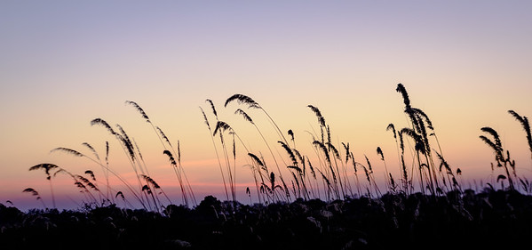 Sunset | Botswana