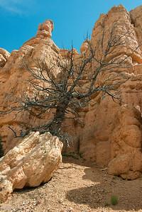 Bryce Canyon-6873