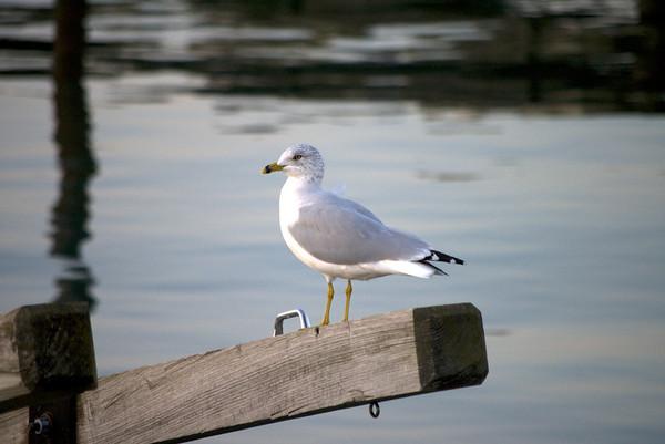 Sexy gull!