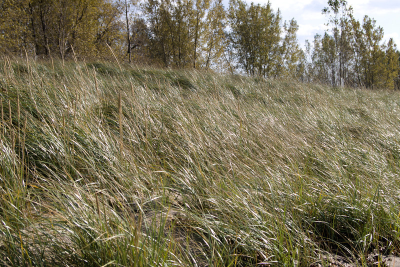 A beautiful fall day in Buffalo. Sea grass
