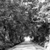 Canopy on a dirt road