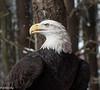 2-14-16.  Amazing beak!