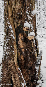 fungus tree 012710-1