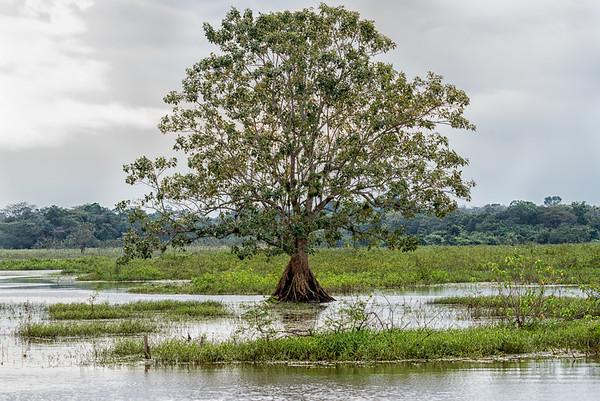 Cano Negro River, Costa Rica