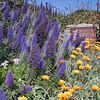 Butterfly Garden - Pacific Grove,California