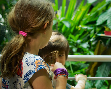 Sis, don't move. You have a butterfly on your shoulder. A day at the California Academy of Sciences ref: 73ac13b9-6aee-45a0-87b1-0c86cb9b906b