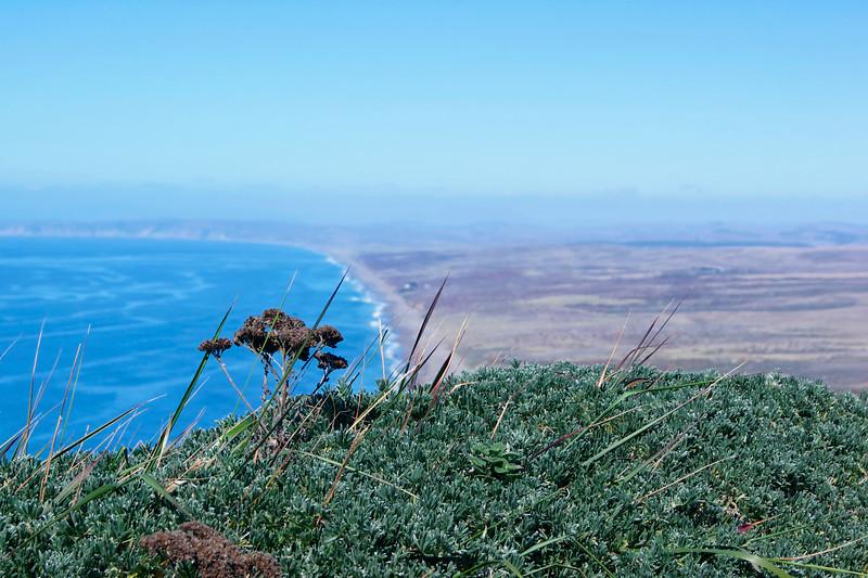 The Point Reyes Shoreline