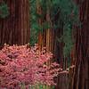 Redwood Feast