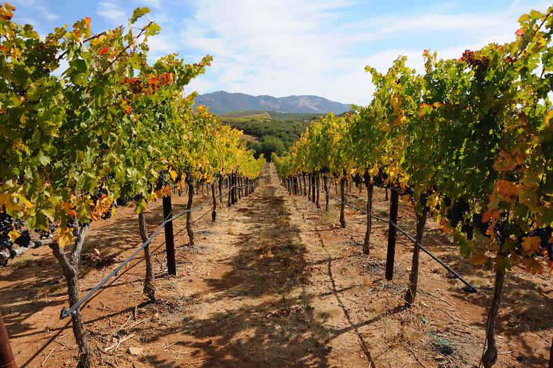 Krupp Brothers Vineyard<br /> Napa, California