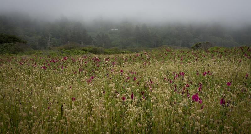 Foggy Morning Field