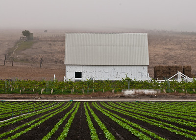 Foggy Morning, White Barn, Central Coast, CA