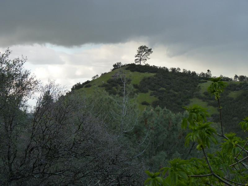 hill_tree
