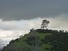 hill_tree2