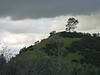 hill_tree3