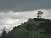 hill_tree4