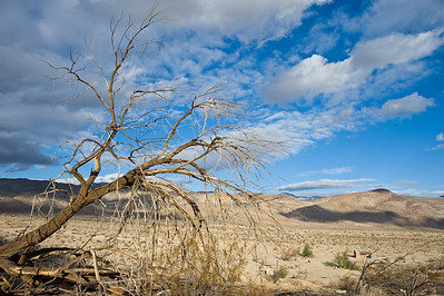 Dead tree with Coyote mountains in background.  Vern Whitaker horse camp, Anza-Borrego SP.
