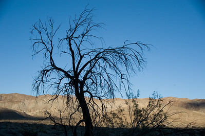 Shaded tree in Afternoon light.  Vern Whitaker horse camp, Anza-Borrego SP.