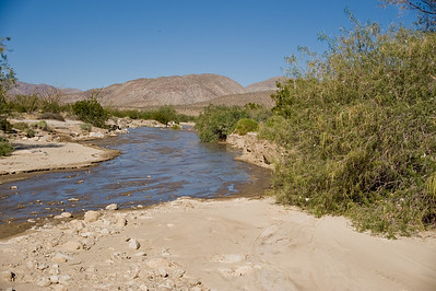 Coyote creek looking northwest.  Lower Willows in Coyote canyon, Anza-Borrego SP.