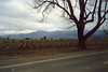 Vineyards in Napa County, circa 1991.