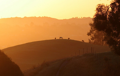 Sunrise colored hills, Castro Valley, CA