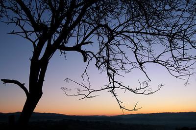 1957 Sunrise Tree