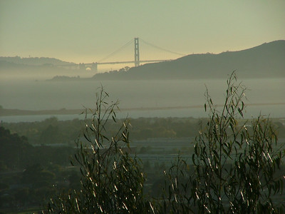 Golden Gate II