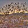Mojave National Preserve - HDR - 19 Mar 2010