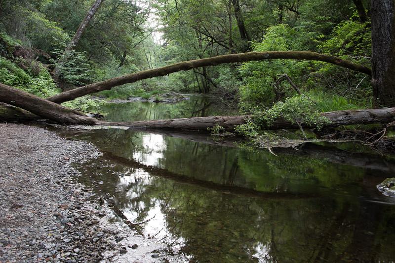Lagunitas creek.  Samuel P. Taylor State Park, California.