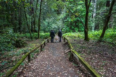 Richard, Sage and Twink.  Used tripod/timer to make this self portrate.  Richardson Grove state park, California.