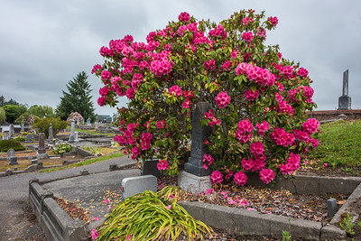 Ferndale Cemetery.  Ferndale, California.