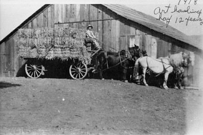 Art Cole at age 12, bringng in baled hay which he loaded on wagon. Location near 2576 White Owl Lane.