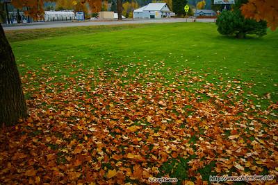 Greenville, Fall 2009