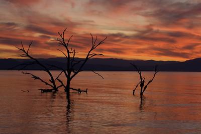 Tree at sunset.  Obsidian Butte, Salton Sea.