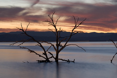 Tree in early evening light.  Obsidian Butte, Salton Sea.