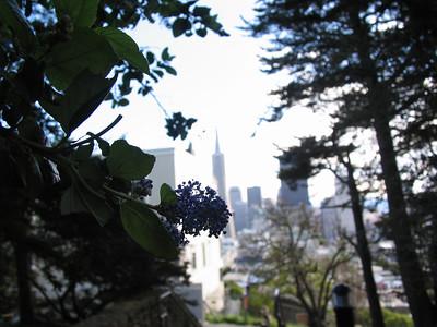 flower, city