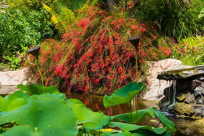 San Diego Botianic Garden.  July 2017