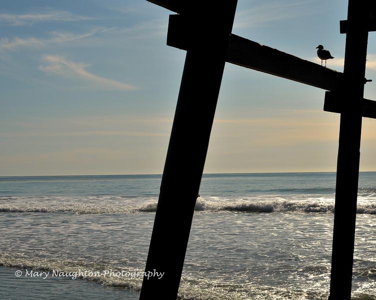 Gull watching waves, San Clemente, CA