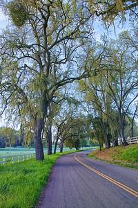Vineyard Drive
