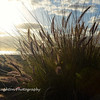 Beach grass, Coronado, CA
