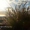 Beach grass, Coronado, CA