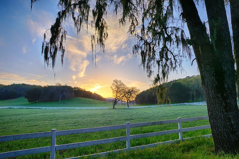 Vineyard Drive Sunrise