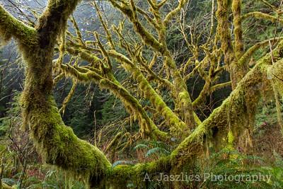 Cattail Moss