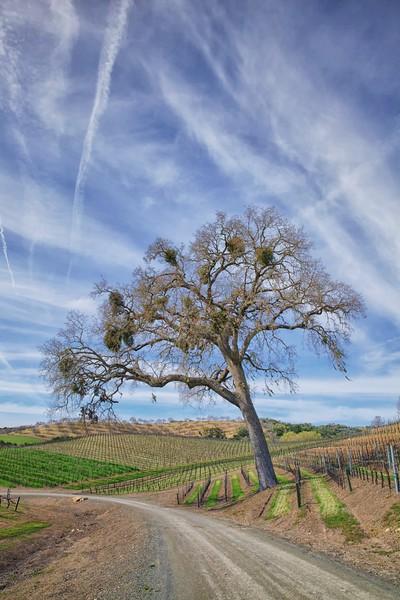 Opolo Vineyards 2