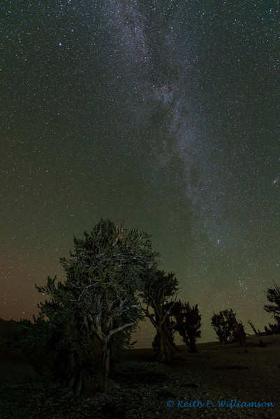 Milky Way over Bristlecone Pines, Patriarch Grove, White Mountains