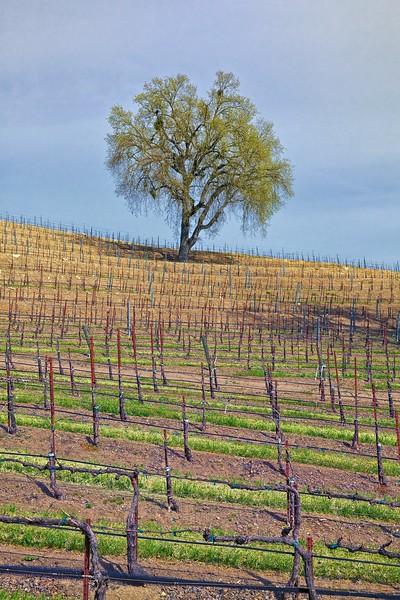 Opolo Vineyards 4