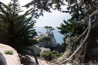 Lone Cypress - 17 Mile Drive - between Monterey and Carmel, CA