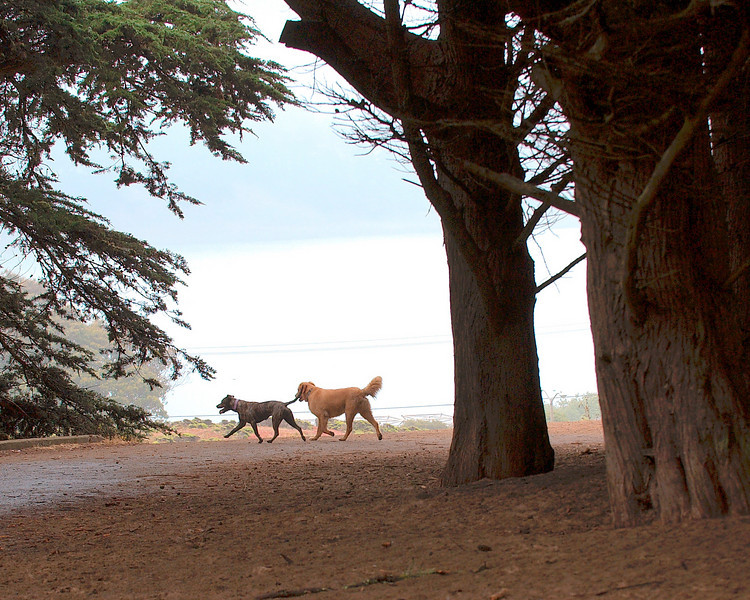Fort Funston Dog Park, San Francisco